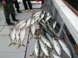 ■10/28(土)鰯の落込み釣りで●ヒラマサ・ブリが絶好調!