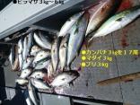 ■9/30(土)釣果●ヒラマサ6kg・マダイ3kg●カンパチ3kgを17尾