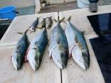 ■11/22(水)福岡市松尾さんの釣果●ヒラマサ6kg・ブリ4kg