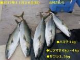 ■11/27(月)北村さんらの釣果