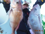 真鯛 1.7kg 1.2kg