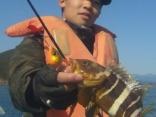 アオハタ水深50m タイラバでの釣果