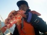 カサゴ 29cm 水深50m ステンレスジグでの釣果
