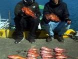 半日釣行 カサゴ、アオハタ、アカハタ