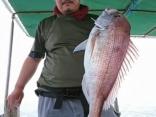 15日 半日釣行 真鯛 タイラバでヒット4kgオーバー