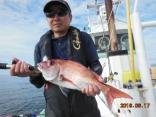 真鯛 1.5kg