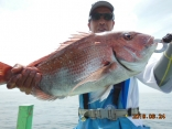 中鯛 2.5kg