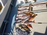 釣果の一部です。イカはポリ袋の中です。
