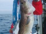 午前便の深海魚狙いで浅場で外道にマダラ