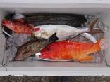 18日 太刀魚ジギング  ライトジギング 半日釣行
