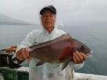 山北さん、良型コロ鯛!