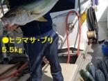 10/22(月)安富さんら ●ヒラマサ・ブリ5.5kg~4kgを30尾