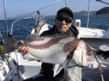 70cmコロ鯛