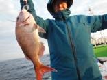 真鯛 1.2kg