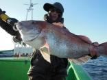 中鯛 3.1kg
