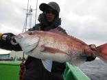 中鯛 2.1kg