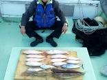 今日の釣果、大漁でした。
