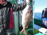 中鯛 2.8kg