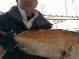 2/18(月)堤さんら ●マダイ~5kg と大物が好釣果