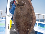 ヒラメ 7.8kg