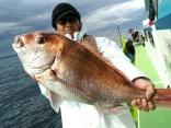 大鯛4.43kg含むマダイ3枚の方