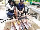 ■5/5(日)釣果熊本県2名で ●マダイ6kg3尾・3kg~1.5kg4尾