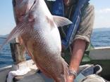 真鯛78cm