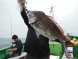 大鯛 5.6kg