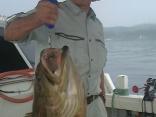 ■7/2(火)釜坂さんの釣果は ●アラ9.5kg