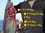 ■9/10(火))●ヒラマサ6kgと5.5kg●アラ7kgと5.5kgと4kg