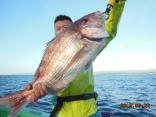 大鯛 4.3kg