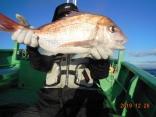 中鯛 2.3kg