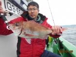 中鯛 1.9kg