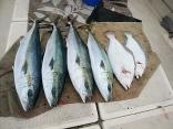 ■3/22(日)中島さ●ヒラマサ 10kg ●ブリ10kg・9kgヒラメ3.5k