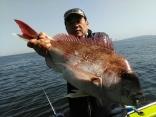 3.4Kg大鯛
