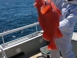 メヌキ4本 写真を撮り忘れましたが13キロの大物を釣って流石でした☺️
