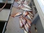 ■6/10(水)4名の釣果●マダイ~7kg●ブリ4kg~6kg
