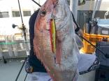 鯛80cm
