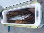 高級魚中心に爆釣