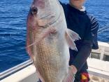 真鯛 60cm