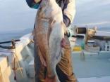 真鯛 85cm
