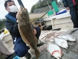 ■4/17(土)山口さんの釣果●ヒラメ 7kg・4kg・3.5kg の3尾