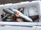 様々な魚達が釣れました