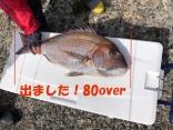 タングステンのグリーンゴールドで釣れた80センチオーバーの大真鯛