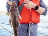 釣り初心者ですが、初めて鯛ラバで鯛・コチ・グチ・ハモetcをゲット!!