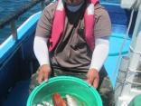 私が 貸竿で 真鯛 大型のホウボウ カサゴ等釣りました