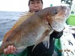 大鯛 7.3kg