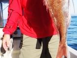 エギングロッドは真っ二つに折れ、それでも上がってきたのは70cmの真鯛